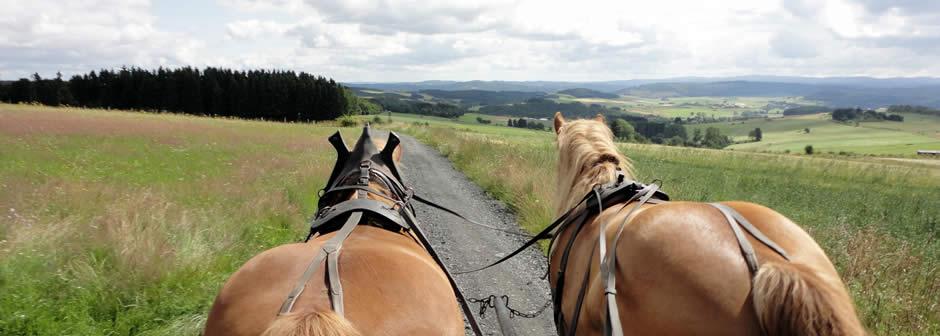 """Mit dem Planwagen """"erfahren"""" Sie die herrliche Sauerländer Bergwelt."""